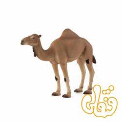 شتر عربی Arabian Camel 387113