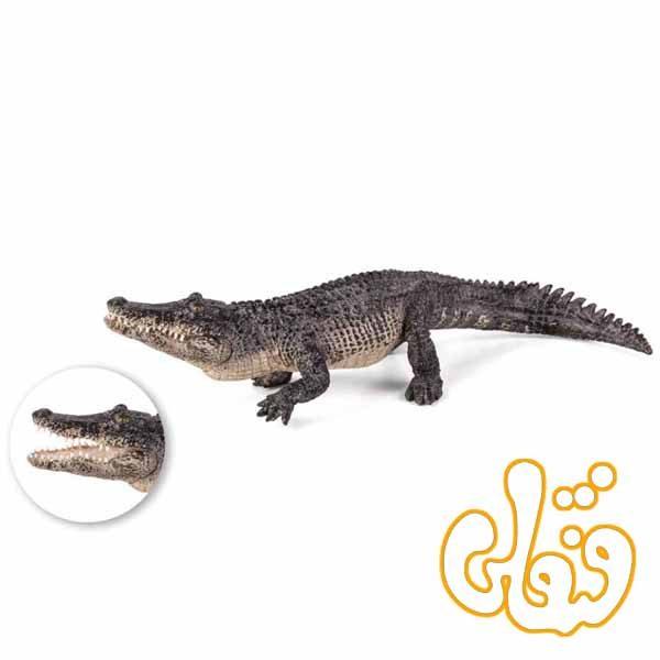تمساح Alligator 387168