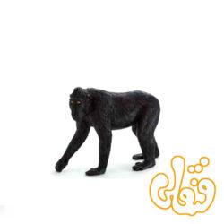 بوزینه کاکلدار سیاه Black Crested Macaque 387182