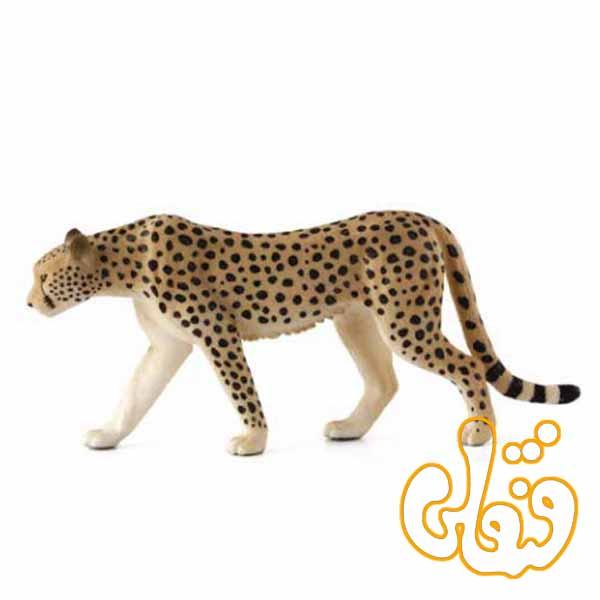 چیتا نر Cheetah Male 387197