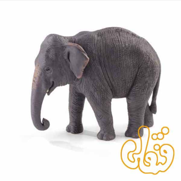 فیل آسیایی Indian Elephant 387266
