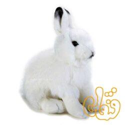 خرگوش قطب شمال 770725