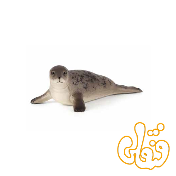 فوک آبی طوسی Grey Seal 387091