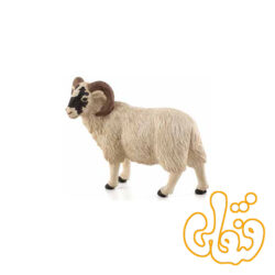 گوسفند صورت سیاه نر Black Faced Sheep ram 387081