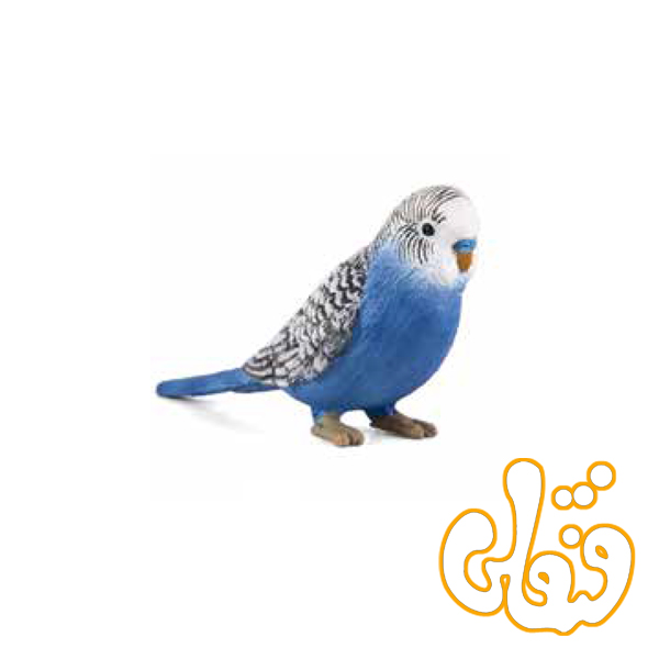 مرغ عشق آبی Budgerigar Blue 387292