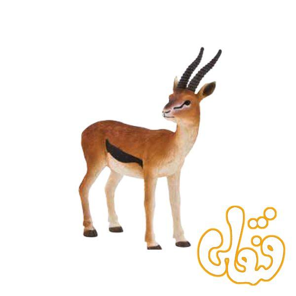 غزال تامسون نر Thomson's Gazelle Male 387122