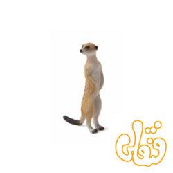 دم عصایی Meerkat 387125