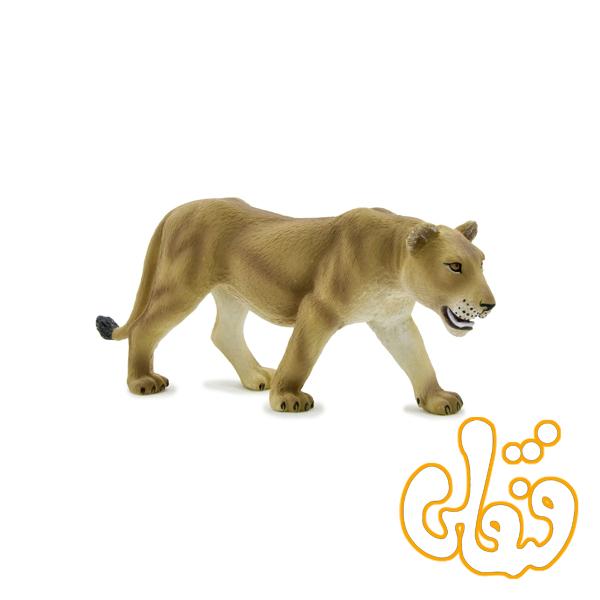 شیر ماده 387010 Lioness