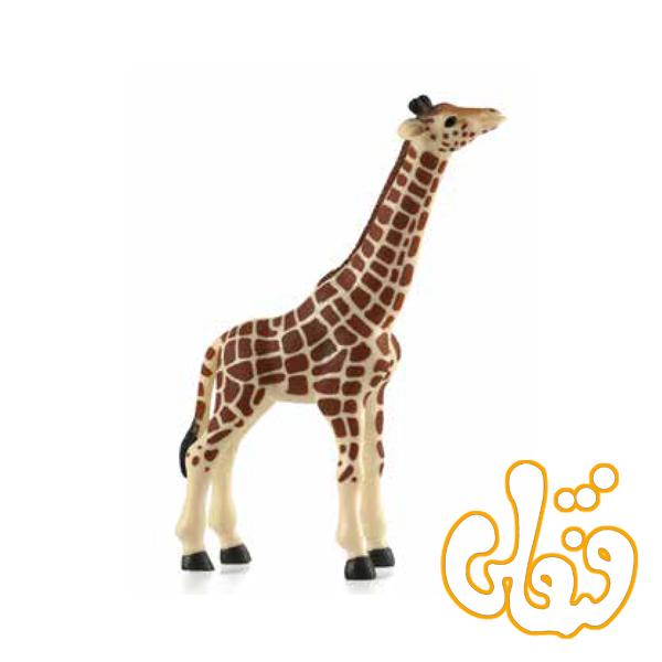 گوساله زرافه Giraffe Calf 387007