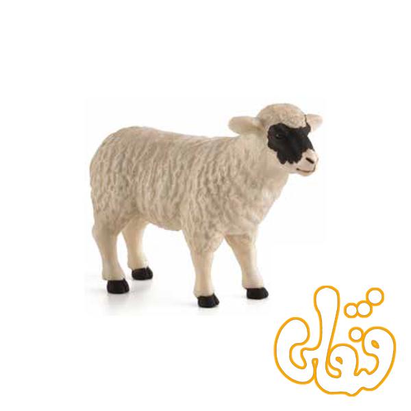 گوسفند صورت سیاه ماده Black Faced Sheep ewe 387058
