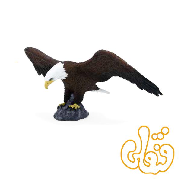 عقاب طاس آمریکایی American Bald Eagle 387027