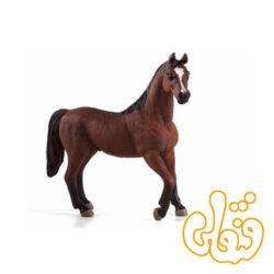 اسب نر فندقی عرب Arabian Stallion Chestnut 387084