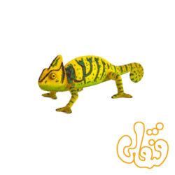 آفتاب پرست Chameleon 387129