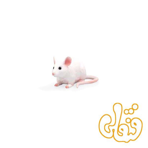 موش Mouse 387235