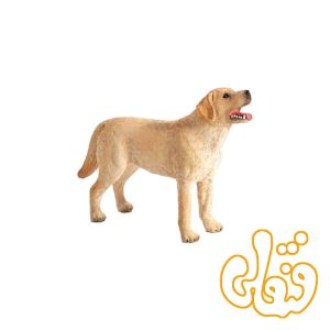 سگ لابرادور Labrador 387271