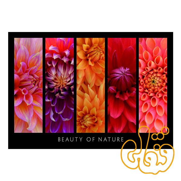 پازل رونزبرگر زیبایی طبیعت Beauty of Nature 19046