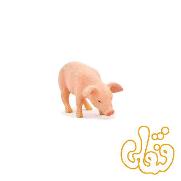 غذا خوردن توله خوک Piglet Feeding 387056