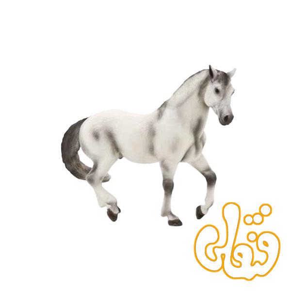 اسب آندلسی طوسی Andalusian Grey 387149