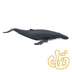 نهنگ کوهان دار Humpback Whale 387119