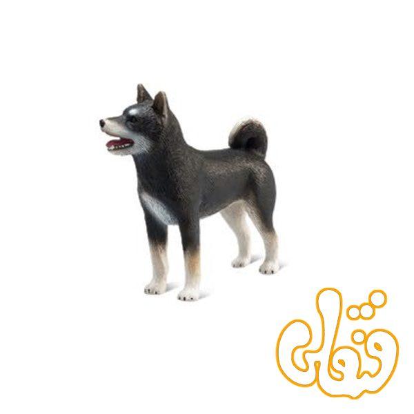 سگ شیبا مشکی Shiba Inu Black 387363