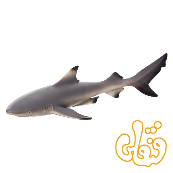 کوسه باله مشکی Black Tip Reef Shark 387357