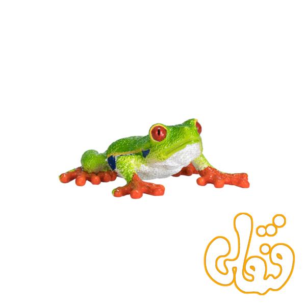 قورباغه چشم قرمز درختی Red Eyed Tree Frog 387299
